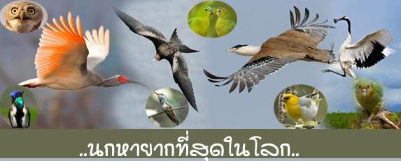 สัตว์ปีกที่มีอยู่ในประเทศไทย สัตว์ปีกหายากใกล้สูญพันธุ์ -